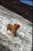 our dog, Gizmo (La Vanoise, France 1998)