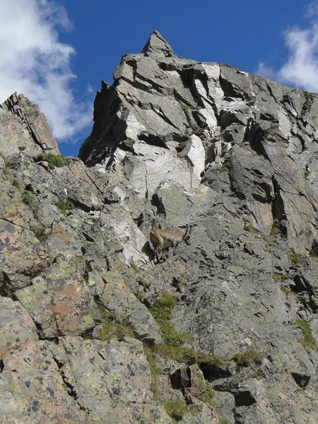 Ibex, climbing colleague :-)) Rock climbing, L'Index 2385m (Aiguille Rouges)