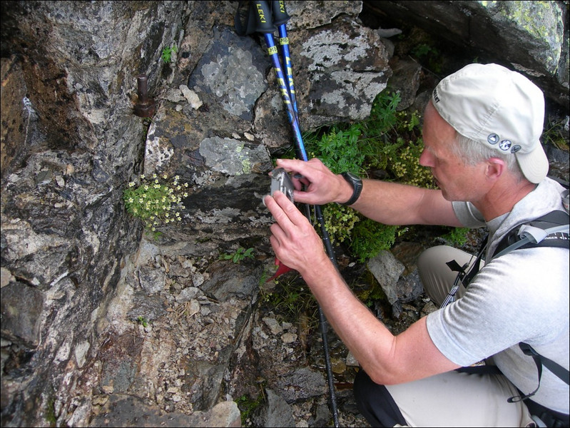 photographing a Saxifrage (montblanc2005)