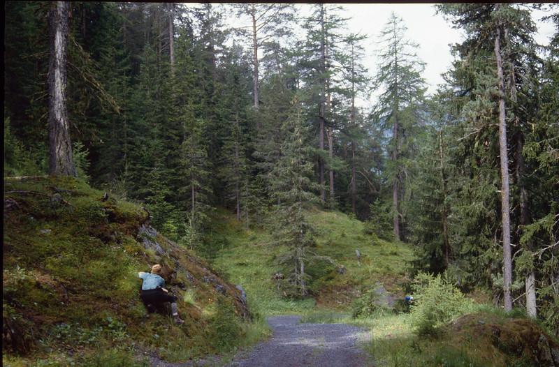 photographing  (National Park Switzerland)