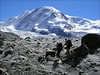 Gorner Glacier and Liskamm (Wallis 2004)