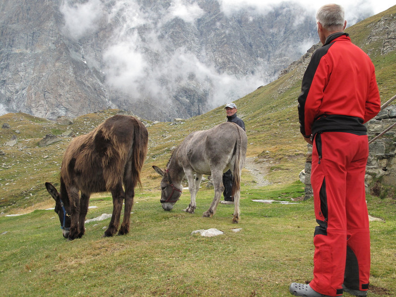 four donkies :-)) ( Schönbielhorn 3472m. Wallis 2009 Switzerland                               )