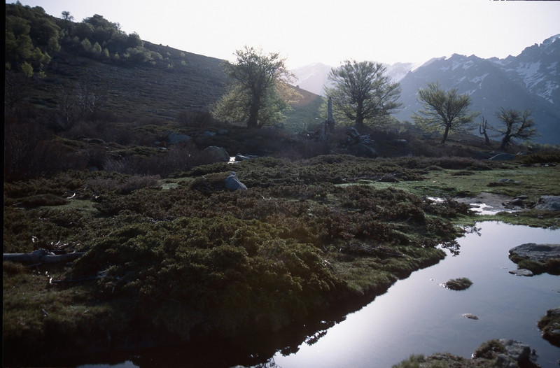 near Bergerie du Vaccaghie 1621m. (GR20  Corsica, France 2003)