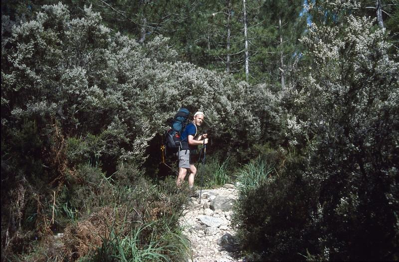 Erica arborea, boomheide (GR20  Corsica, France 2003)