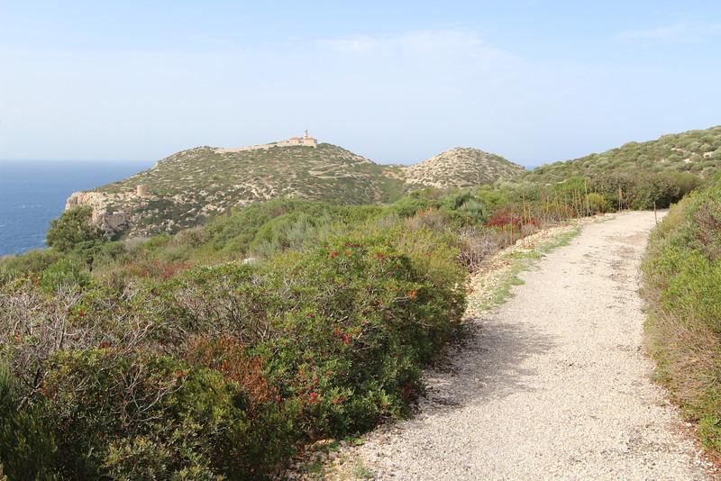 Pistacia lentiscus, and road to des Liebeig, Island, Parc Naturel de sa Dragonera,