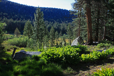 This is the meadow at Golden Trout Camp.  The green colors were really intense at this time of day.