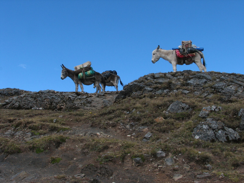 donkeys on the Collota pass (Peru 2009, Yuraj Machay 4000m. - Collota 4360m.pass - Safunna 4150m. Cordillera Blanca)