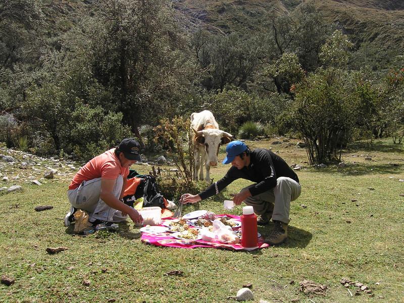 lunchtime (Peru 2009, Llamacoral 3750m. - Taullipampa 4150m. Cordillera Blanca    )