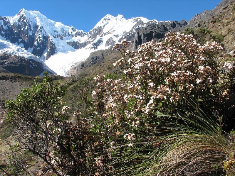 beautiful mountains and plants (Peru 2009, Safuna 4150m. - Lakes Safuna - Mesapata pass 4460m - underneath Gara Gara pass 4550m. Cordillera Blanca)