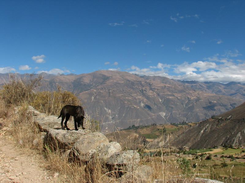 "our trekkingdog ""Hoover"" is watchful (Peru 2009, Lake Cullicocha 4628m.  - Calamina 3950m. Cordillera Blanca)"