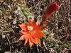 IMG_3839 (Peru 2009, Calamina 3950m. - Banos 2900m. Cordillera Blanca)