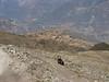 Hoover follows (Peru 2009, Lake Cullicocha 4628m. - Calamina 3950m. Cordillera Blanca)