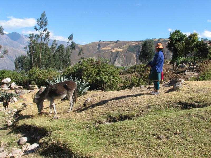 show out the donkey (Peru 2009, Calamina 3950m. - Banos 2900m. Cordillera Blanca)