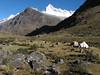 Campsite 2, Taullipampa 4250m. with Alpamayo 5947m. (Peru 2009,  Taullipampa 4250m. Cordillera Blanca)