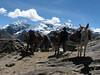 Vientuna pass 4770m. (Peru 2009, Jancarurish 4250m. - Vientuna pass 4770m. - Osururi pass 4860m. - Lake Cullicocha 4628m. Cordillera Blanca)