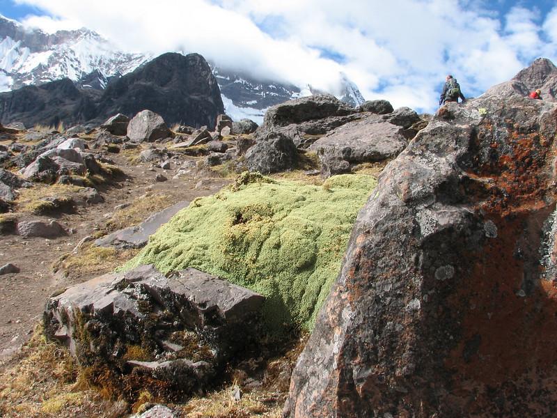 cushionplants along the path (Peru 2009, Upispampa- Arapapass 4770m - Auzangate pass 4870m - Auzangatecocha 4670m. Ausangate)
