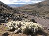 landscape near Pacchanta (Peru 2009, Teclla cocha 4800m - Abra Campo Pass 5030m - Pacchanta 4300m.  Auzangate )