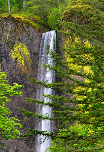 Waterfall Framed By Trees
