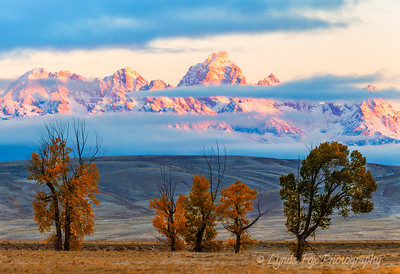 Morning Glow Over Teton