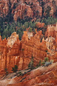 Trees Embraced by Hoodoos