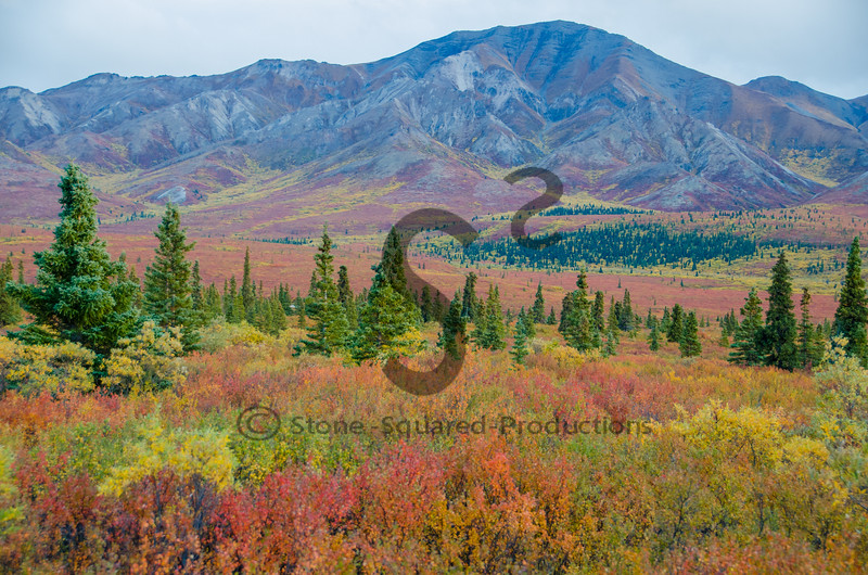 Fall in Denali