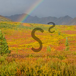 Rainbow of Fall Colors