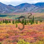 Tundra Colors