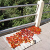 chillis drying in the sun, Bhutan