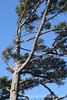 8921 Windswept - Ecola State Park, Oregon Coast