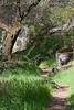 Summer Trail<br /> South Yuba River State Park, California<br /> 0803B-T1