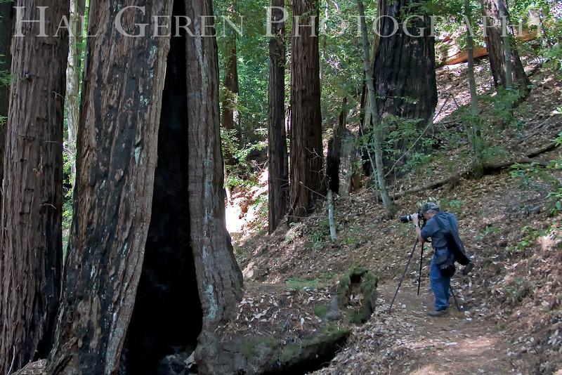 Hal Geren<br /> Big Basin State Park, California<br /> 0910BB-G2j