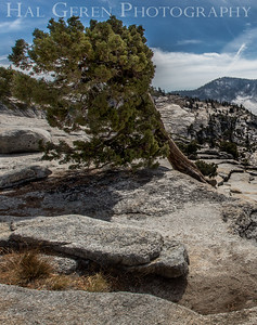 Olmstead Point Tioga Pass, California 1610S-OP1LR