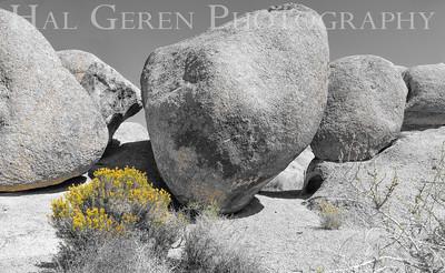 Scrub and Rocks Alabama Hills, Lone Pine, CA 1710S-AHFR2B2