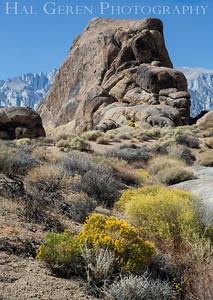 Rock and Scrub Alabama Hills, Lone Pine, CA 1710S-R1