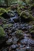 Cataract Falls<br /> Marin, California<br /> 1501C-F11