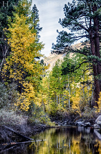 Rock Creek Eastern Sierra, California 1410S-AC10