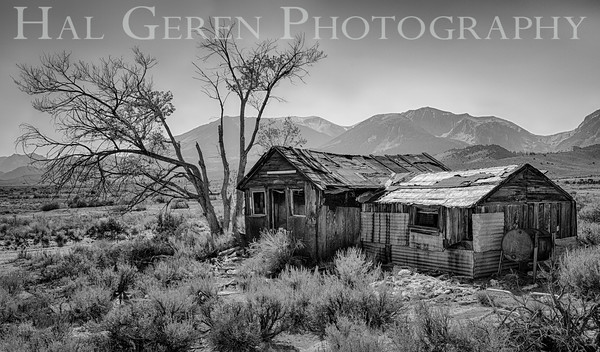 Abandoned Cabin Eastern Sierra, California 1410S-CH5ABW22