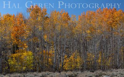 Aspen Wolf Ranch Road, California 1410S-A5