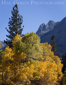 Aspen Eastern Sierra, California 1410S-A13