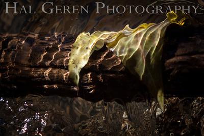 In a Clear Mountain Stream... Lee Vining, California 1310A-LVC17LL