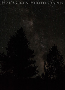 Milky Way over Trees Lee Vining, California 1207S-S20