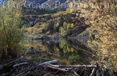 Beaver Dam Lundy Canyon, Eastern Sierra 1210S-BD3
