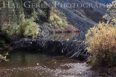 Beaver Dam Lundy Canyon, Eastern Sierra 1210S-BD1