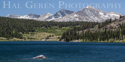 Ellery Lake Yosemite, California 1407S-EL1