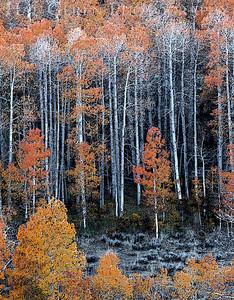Conway Pass Eastern Sierra, California 1110S-CP6E2