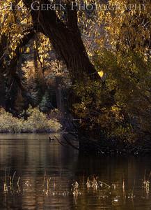 Lundy Lake Eastern Sierra, California 1110S-LLR11E1