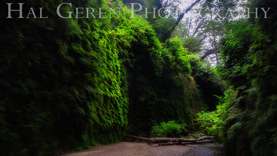 Fern Canyon Prairie Creek Redwoods, California 1708C-FC2E1