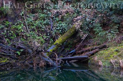 Portola State Park, California 1203P-TP1E2