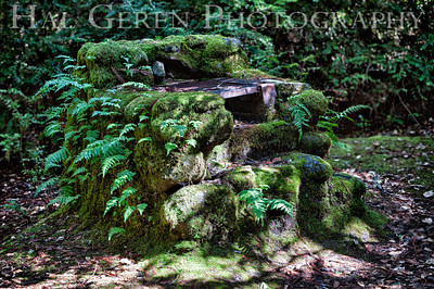 Overgrown Fireplace Portola State Park, California 1203P-FHDR1