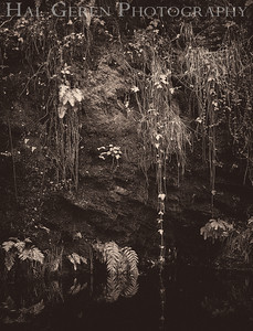 Stream Grotto Portola State Park, California 1203P-G4E1